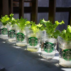 菜々緒の趣味の水耕栽培