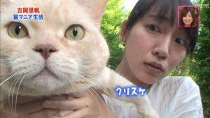 吉岡里帆と猫2