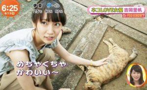 吉岡里帆と猫3
