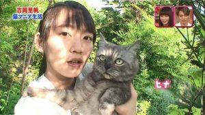 吉岡里帆と猫1